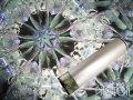 『誕生石の万華鏡』 オイル万華鏡   5月 エメラルド